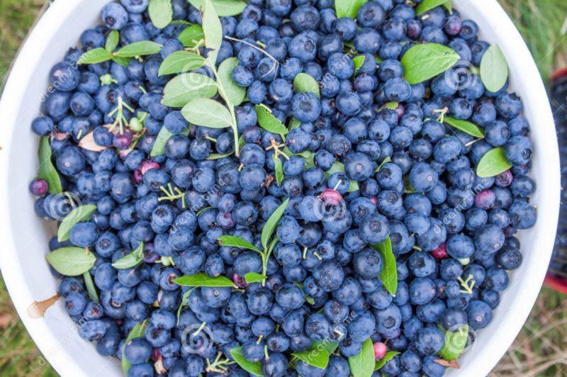 神密逆齡的粉藍美肌精華--klairs 神密逆齡的粉藍美肌精華–klairs              800x532