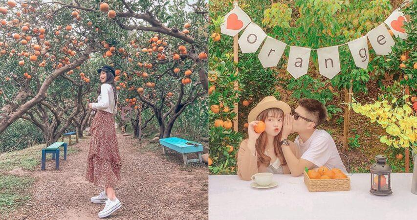 以為去了濟州島!滿滿橘子包圍,如此夢幻的「橙香森林」居然在台灣苗栗!